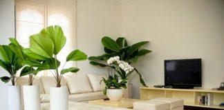 Trồng cây trong nhà vừa giúp điều hòa không khí, giảm thiểu một số loại độc tố không tốt cho sức khỏe mà còn có ý nghĩa phong thủy.