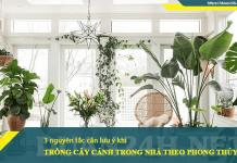 Lưu ý khi trồng cây xanh trong nhà để hợp phong thủy